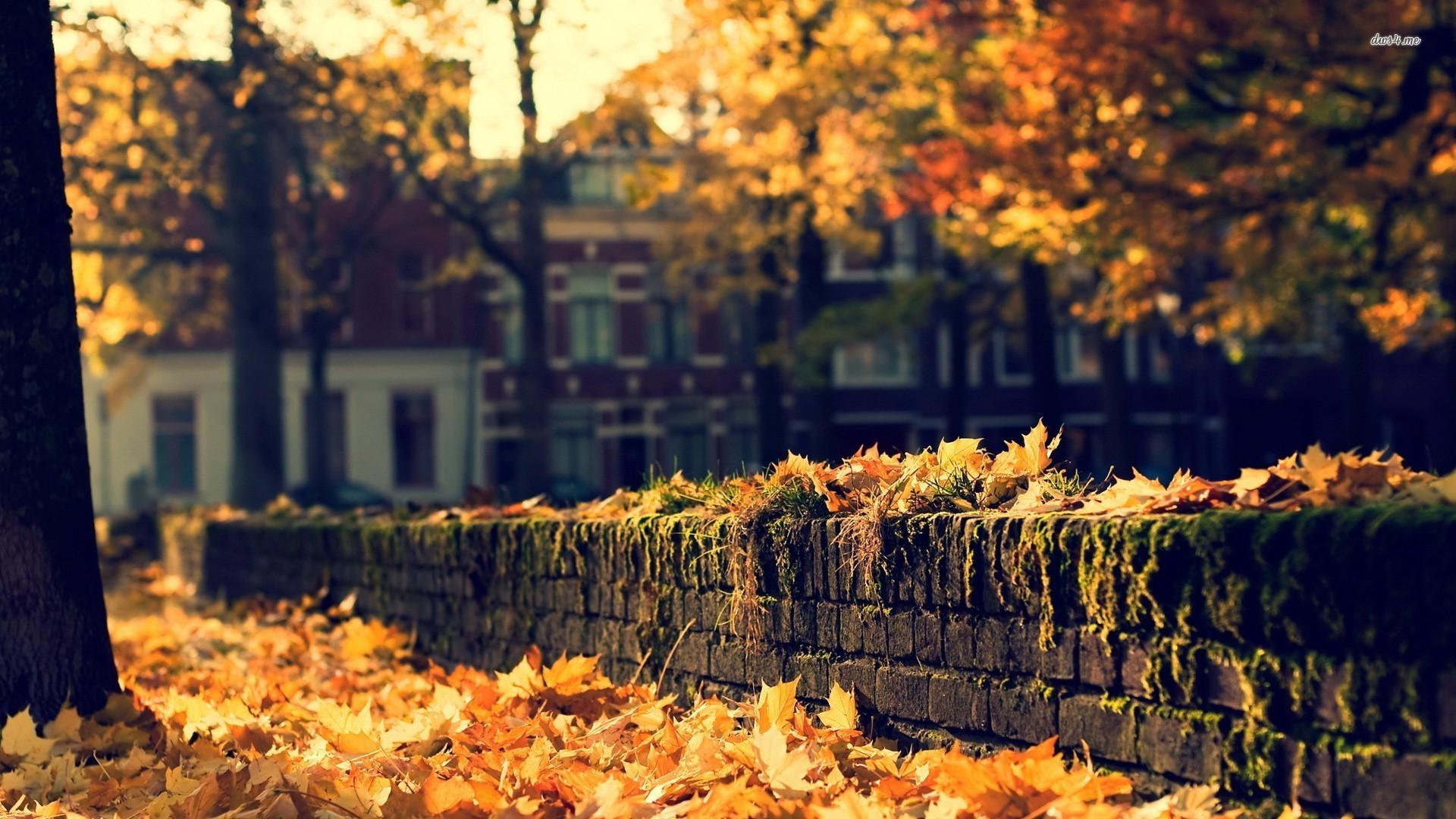Autumn Background Tumblr Laptop