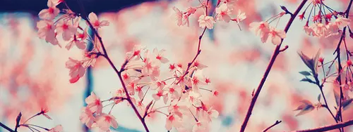 — Masahiko Kurosawa — ID Tumblr_static_tumblr_static_filename_640