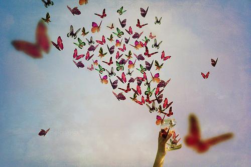 Resultado de imagem para borboletas voando tumblr