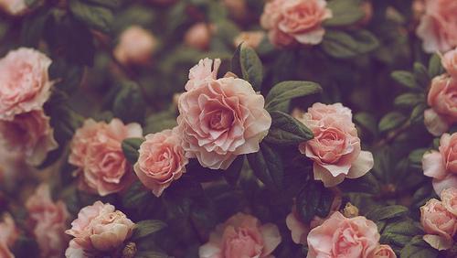 тумблер цветы фото