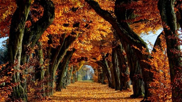Znalezione obrazy dla zapytania autumn tumblr