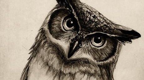 Owl Tumblr owl tumblr Gall...