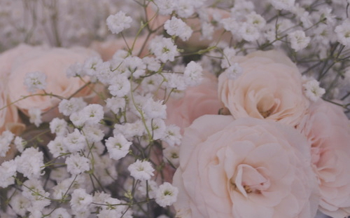 Rose Wallpaper Tumblr Light Pink Roses Tumblr Pale