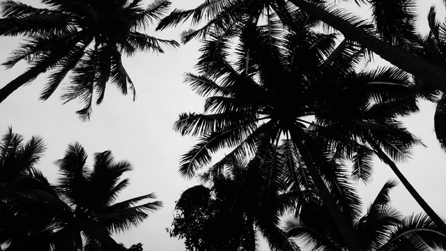 Trees tumblr gallery Black and white themes for tumblr