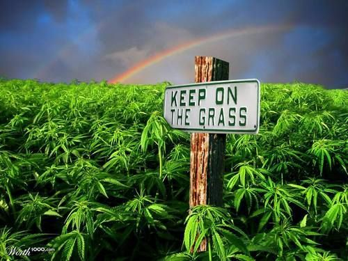 Keep off a grass