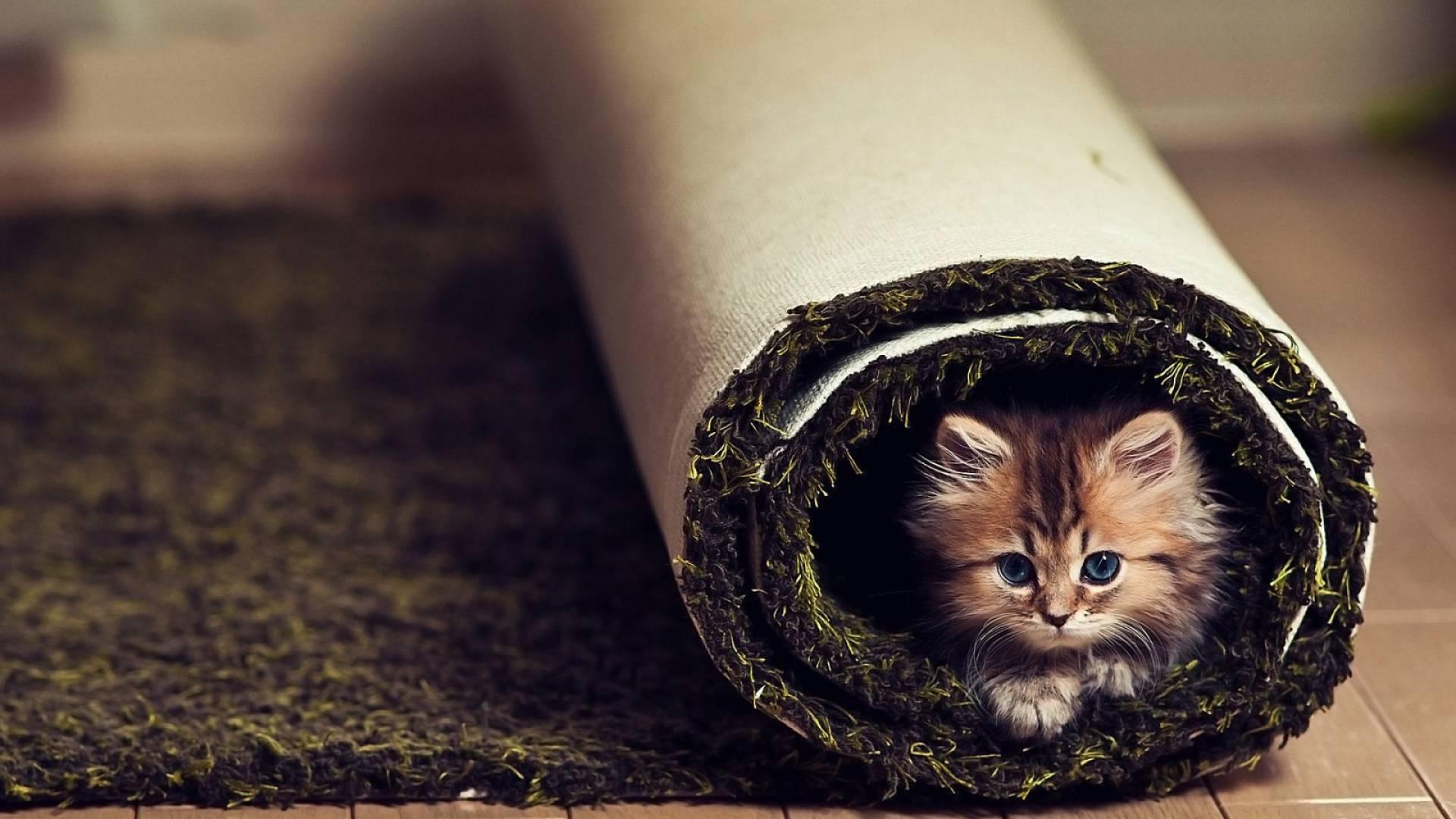 Tumblr Fondos De Pantalla De Navidad: Primer Gato