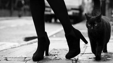 Image result for black cat tumblr