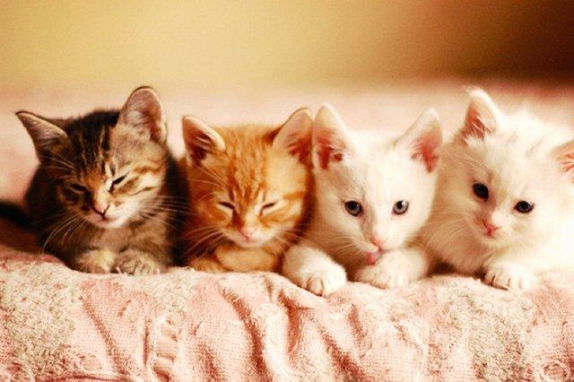 Výsledek obrázku pro cute kitty