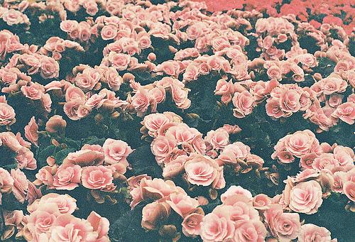Hipster Floral Wallpaper Hipster Flower Backgrounds
