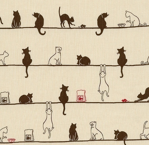 Koty i kociaki.