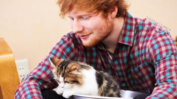 Ed Sheeran ile ilgili görsel sonucu