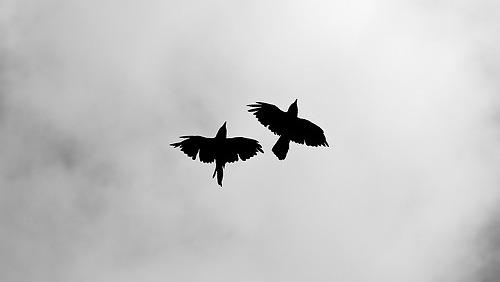 Resultado de imagen para tumblr blackbird
