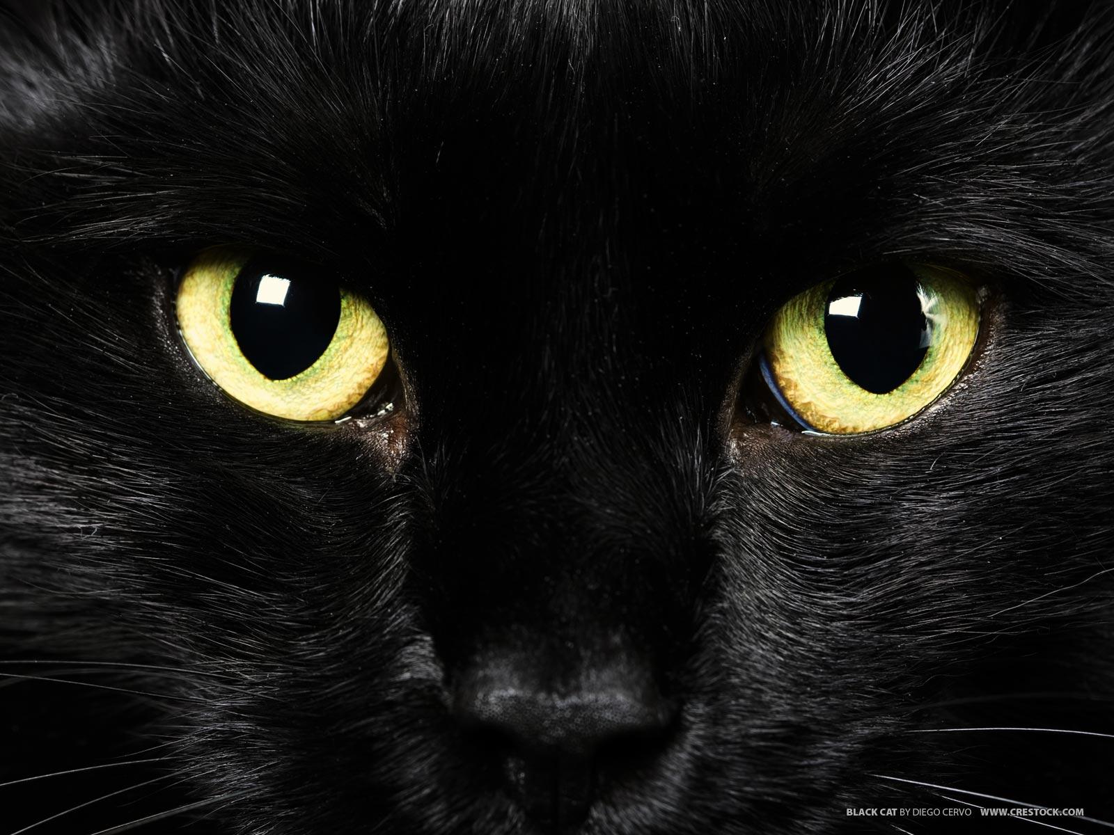 Black Cat Background Tumblr Black Cat Tumblr Wallp...