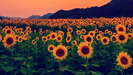 Luz Dos Olhos Tumblr Luz Dos Olhos