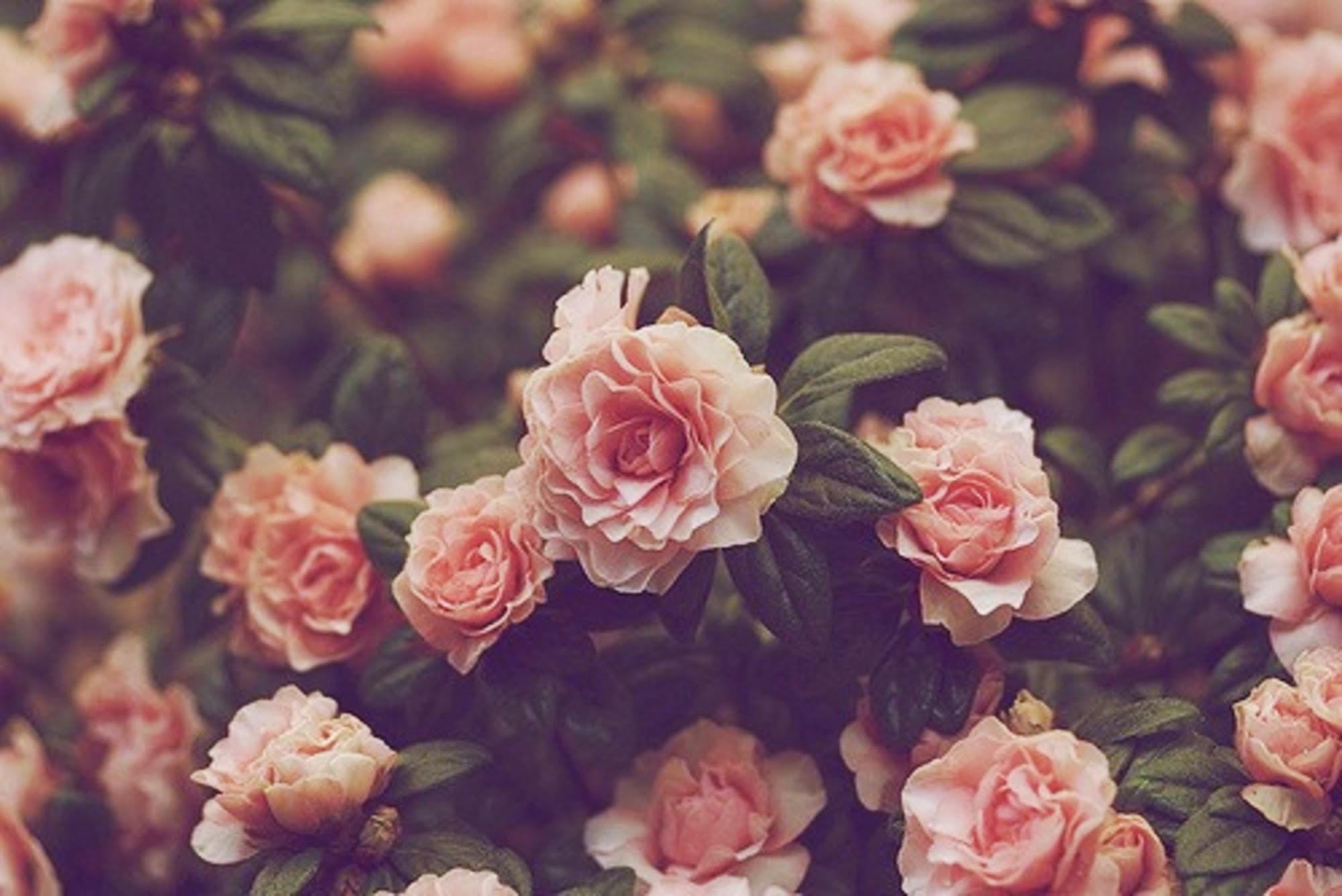 Vintage Flowers Tumblr Backgrounds