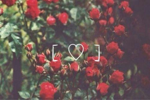 Resultado De Imagen Para Rosas Tumblr Tumblr