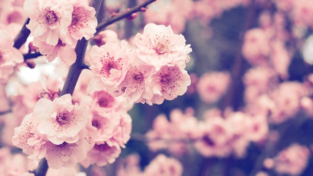Výsledek obrázku pro spring tumblr