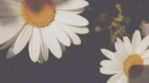 Legendas para fotos sozinhas tumblr com flores