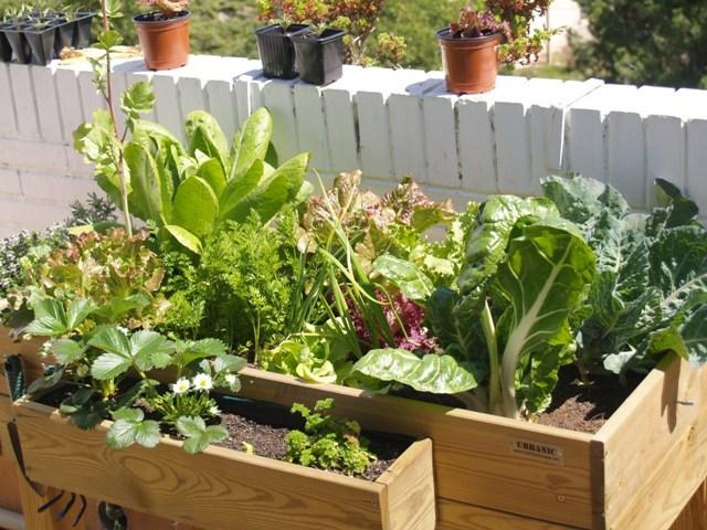 Mi casa es un jardin