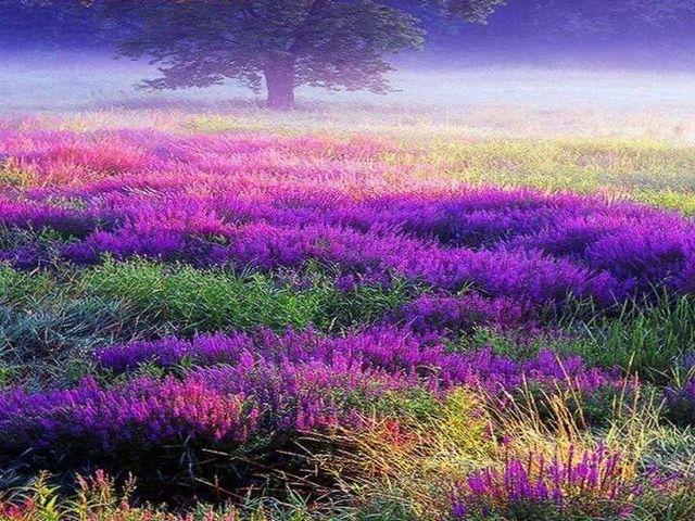 Purple Things Tumblr images